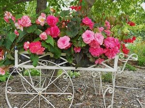 begonias in cart