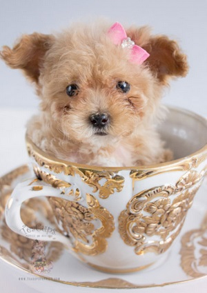 One Adorable Poodle Plus One Creative Solopreneur